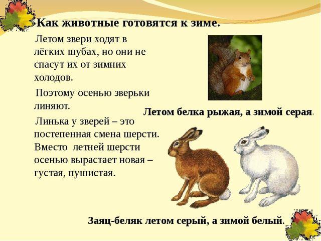 Как животные готовятся к зиме. Летом звери ходят в лёгких шубах, но они не сп...