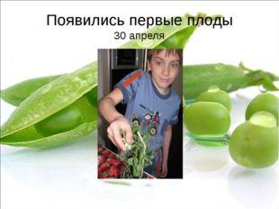 Появились первые плоды 30 апреля