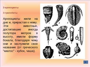 2-археоциаты 3-трилобиты Археоциаты жили на дне и, прирастая к нему. Эти живо