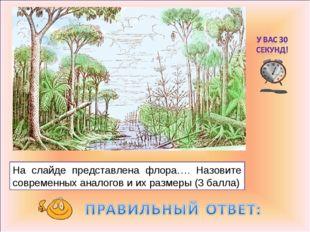 На слайде представлена флора…. Назовите современных аналогов и их размеры (3