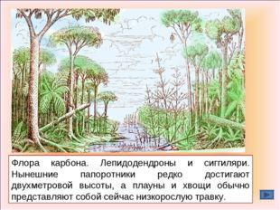 Флора карбона. Лепидодендроны и сиггиляри. Нынешние папоротники редко достига