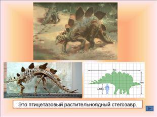 Это птицетазовый растительноядный стегозавр.