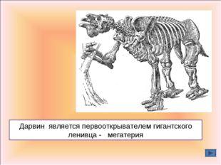 Дарвин является первооткрывателем гигантского ленивца - мегатерия