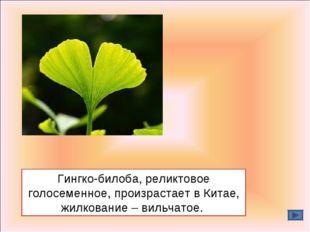 Гингко-билоба, реликтовое голосеменное, произрастает в Китае, жилкование – ви