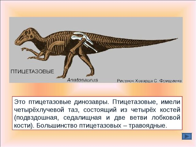 Это птицетазовые динозавры. Птицетазовые, имели четырёхлучевой таз, состоящий...