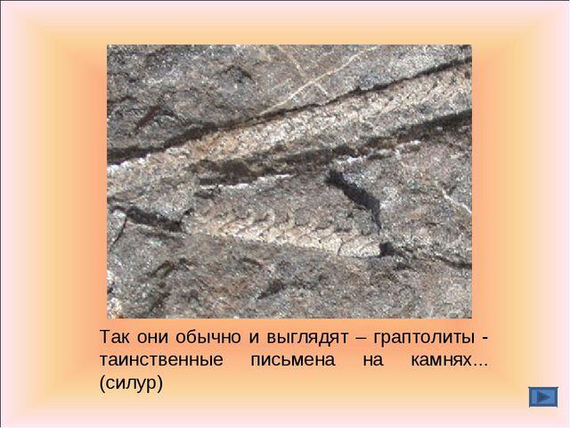 Так они обычно и выглядят – граптолиты - таинственные письмена на камнях... (...