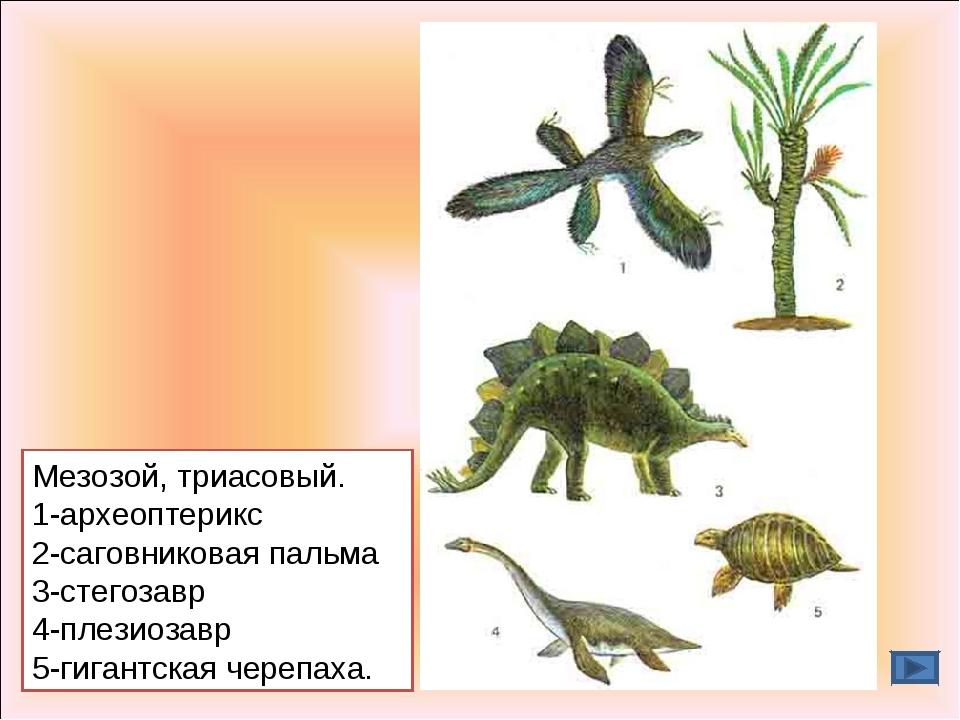Мезозой, триасовый. 1-археоптерикс 2-саговниковая пальма 3-стегозавр 4-плезио...