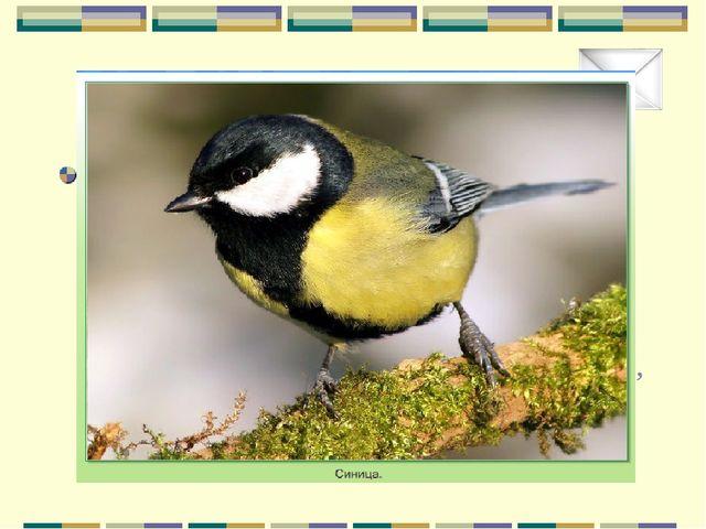 Почтовый ящик «У меня на голове черная шапочка, спинка, крылья и хвост темные...