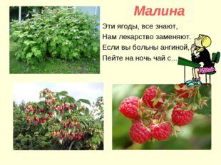 Малина Эти ягоды, все знают, Нам лекарство заменяют. Если вы больны ангиной,