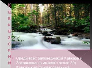 Кавказский биосферный заповедник Среди всех заповедников Кавказа и Закавказья
