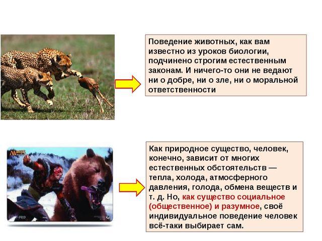 Поведение животных, как вам известно из уроков биологии, подчинено строгим ес...