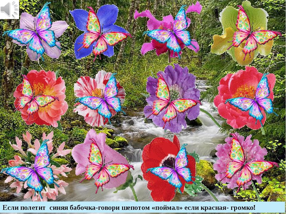 Если полетит синяя бабочка-говори шепотом «поймал» если красная- громко!