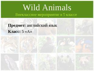 Предмет: английский язык Класс: 5 «А» Wild Animals Внеклассное мероприятие в