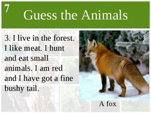 Guess the Animals 3. I live in the forest. I like meat. I hunt and eat small