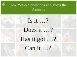 Ask Yes-No questions and guess the Animals Is it …? Does it …? Has it got …?