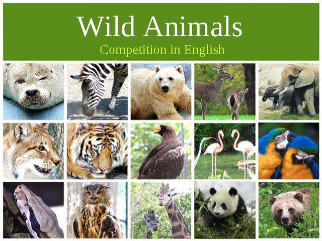 Competition in English Wild Animals
