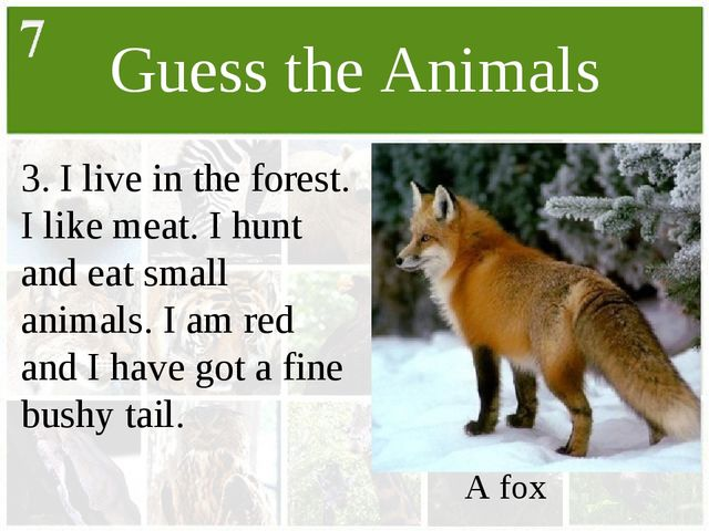 Guess the Animals 3. I live in the forest. I like meat. I hunt and eat small...