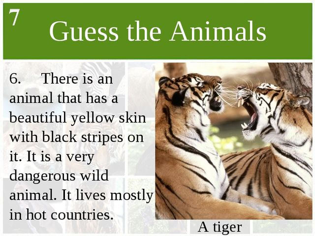 Guess the Animals 6.	There is an animal that has a beautiful yellow skin with...
