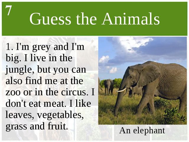Guess the Animals 1. I'm grey and I'm big. I live in the jungle, but you can...