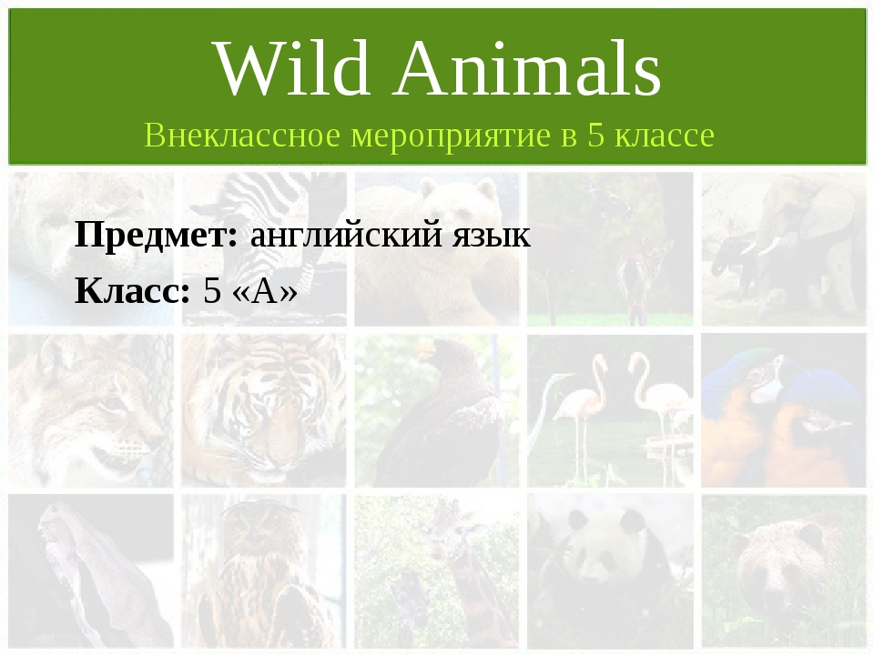 Предмет: английский язык Класс: 5 «А» Wild Animals Внеклассное мероприятие в...