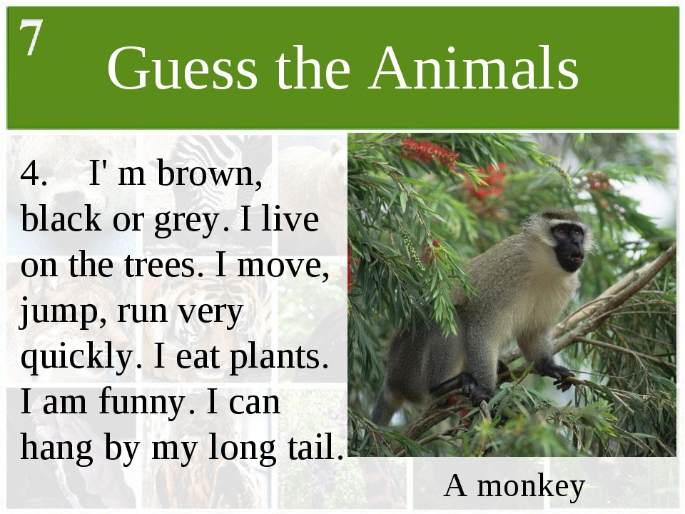 Guess the Animals 4.	I' m brown, black or grey. I live on the trees. I move,...