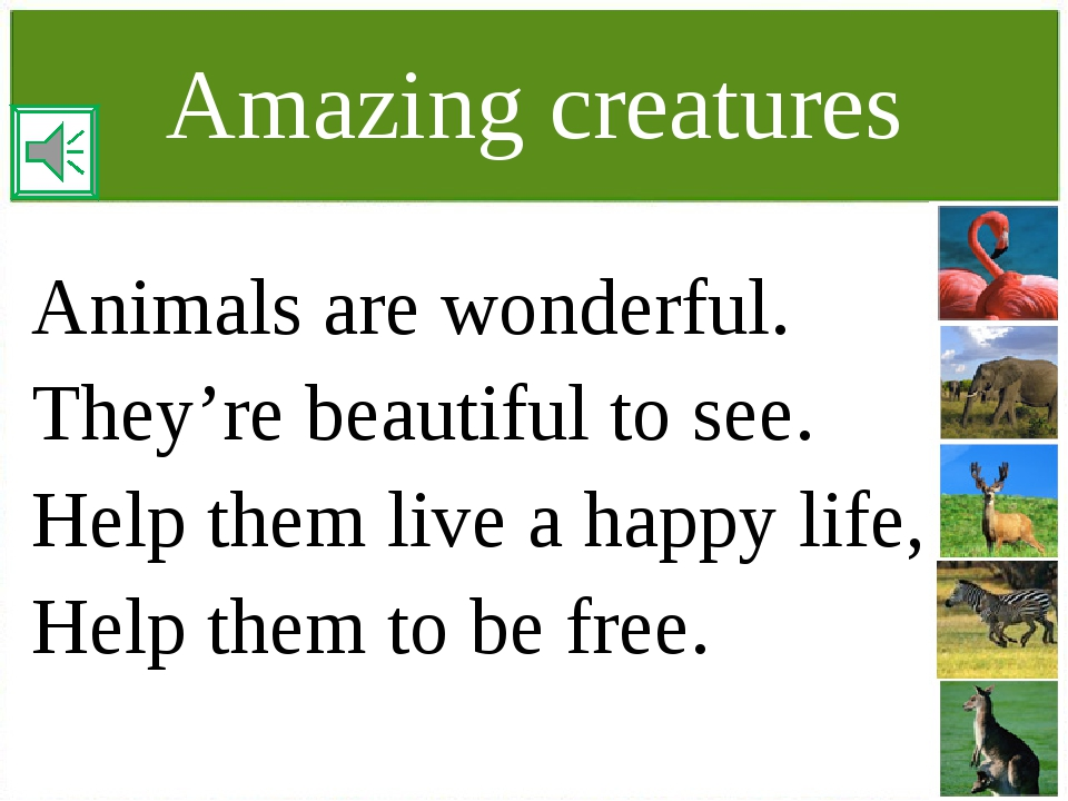 Amazing creatures Animals are wonderful. They're beautiful to see. Help them...