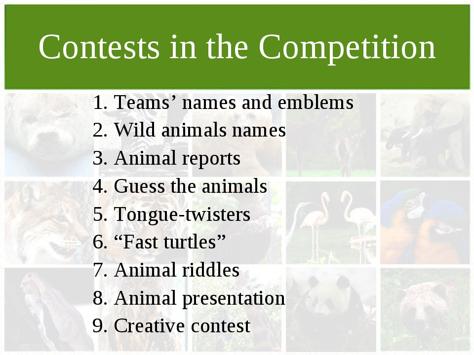 Contests in the Competition 1. Teams' names and emblems 2. Wild animals names...