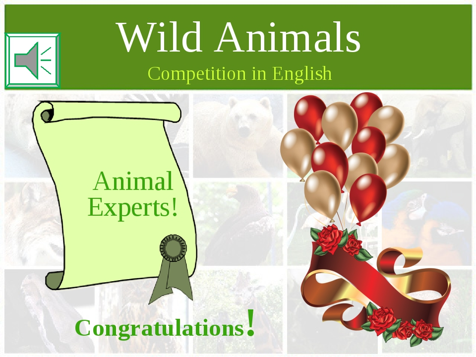 Competition in English Wild Animals Animal Experts! Congratulations!