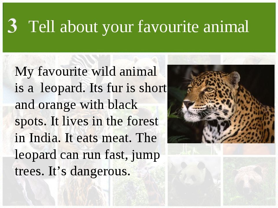 Tell about your favourite animal My favourite wild animal is a leopard. Its f...