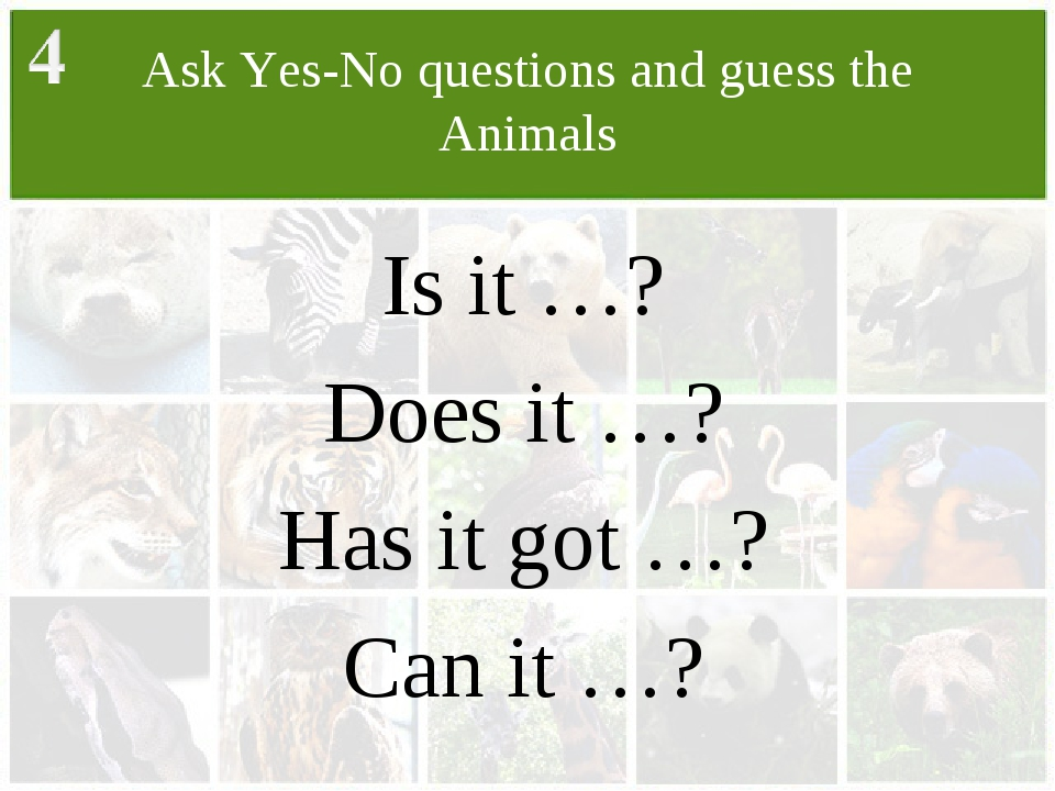 Ask Yes-No questions and guess the Animals Is it …? Does it …? Has it got …?...