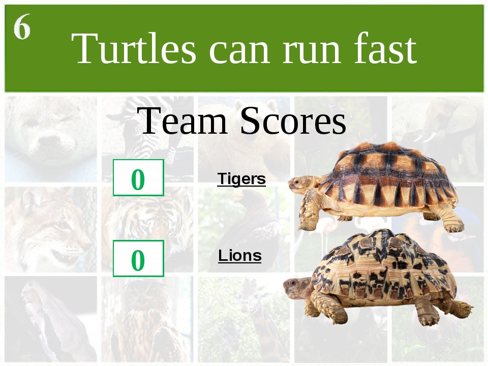 Turtles can run fast Team Scores 0 0 Tigers Lions