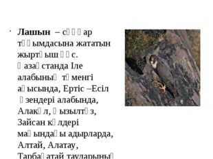 Лашын – сұңқар тұқымдасына жататын жыртқыш құс. ҚазақстандаІле алабыныңтөм