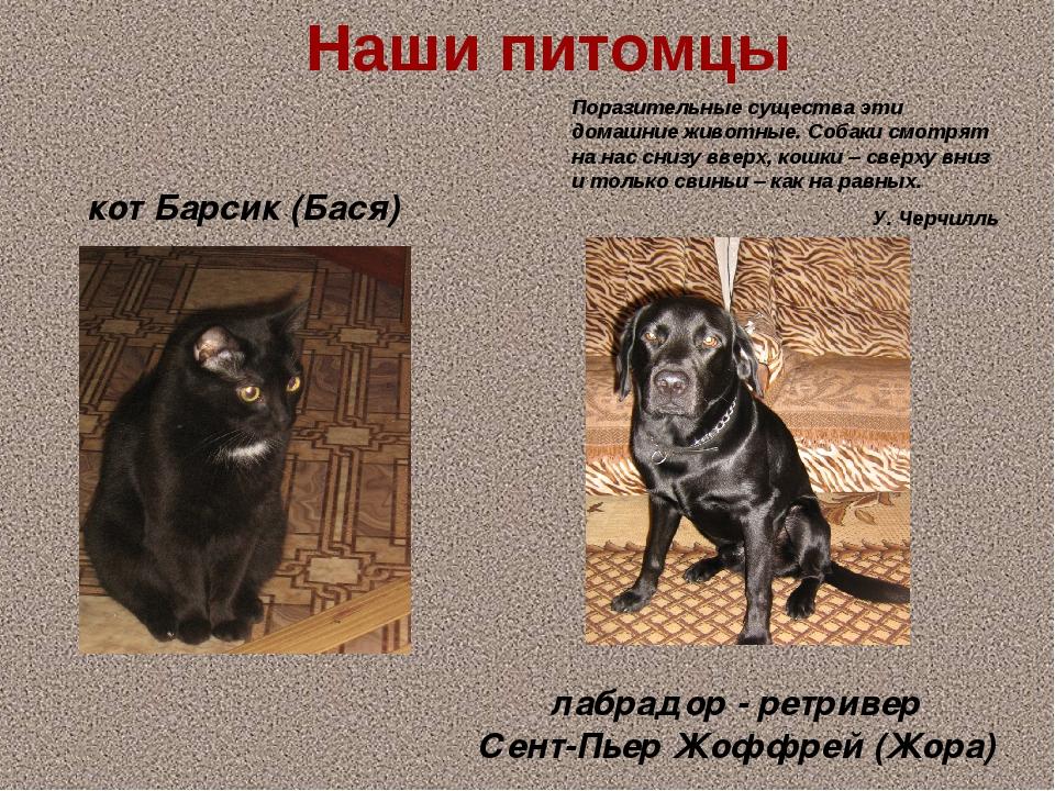 Наши питомцы Поразительные существа эти домашние животные. Собаки смотрят на...