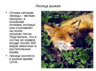 Лисица рыжая Основа питания лисицы– мелкие грызуны, в основном полевки, кото