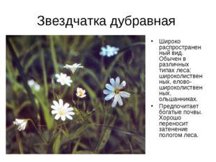 Звездчатка дубравная Широко распространенный вид. Обычен в различных типах ле