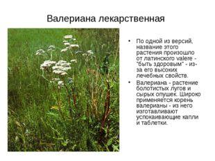 Валериана лекарственная По одной из версий, название этого растения произошло