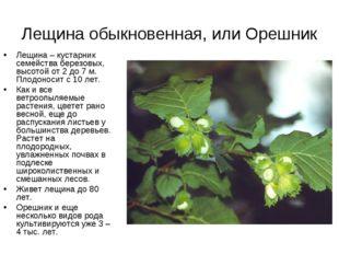 Лещина обыкновенная, или Орешник Лещина– кустарник семейства березовых, высо