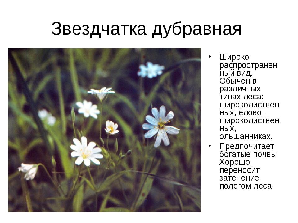 Звездчатка дубравная Широко распространенный вид. Обычен в различных типах ле...