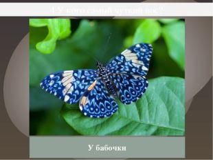 4.У кого самый чуткий нос? У бабочки