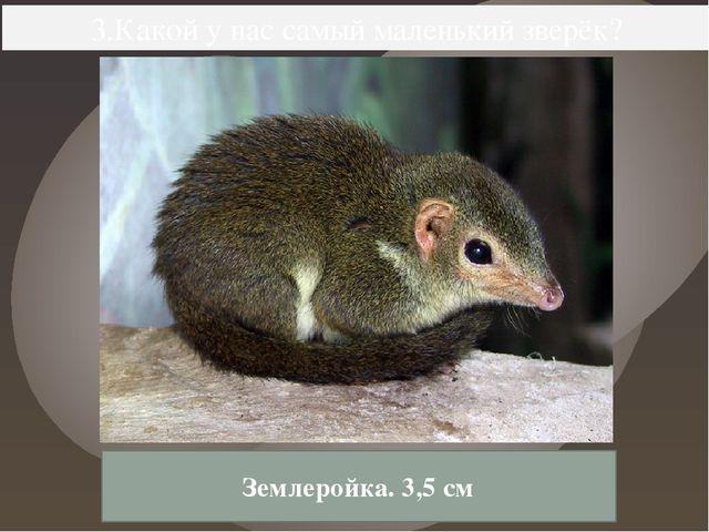3.Какой у нас самый маленький зверёк? Землеройка. 3,5 см