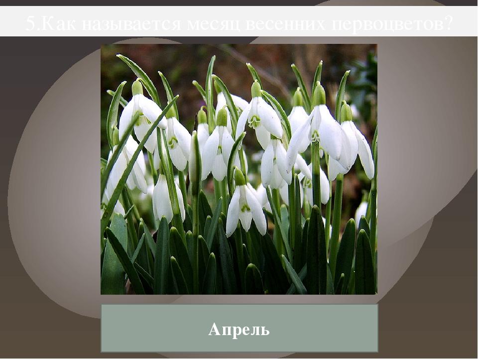 5.Как называется месяц весенних первоцветов? Апрель