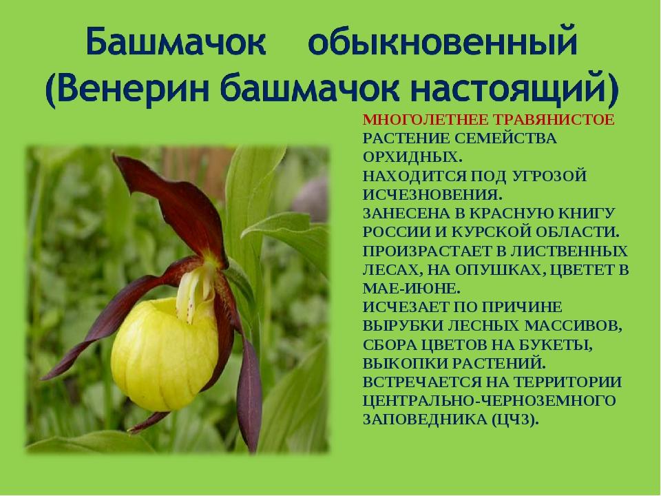 научиться растения красной книги с картинками и названиями страницы