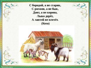 С бородой, а не старик, С рогами, а не бык, Доят, а не корова, Лыко дерёт,