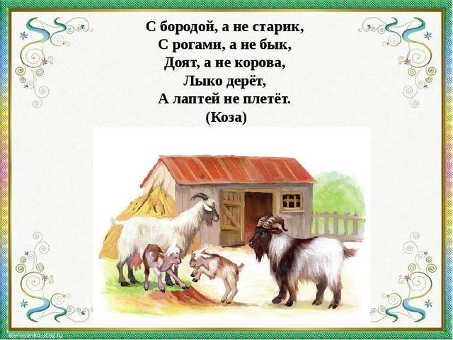 С бородой, а не старик, С рогами, а не бык, Доят, а не корова, Лыко дерёт,...