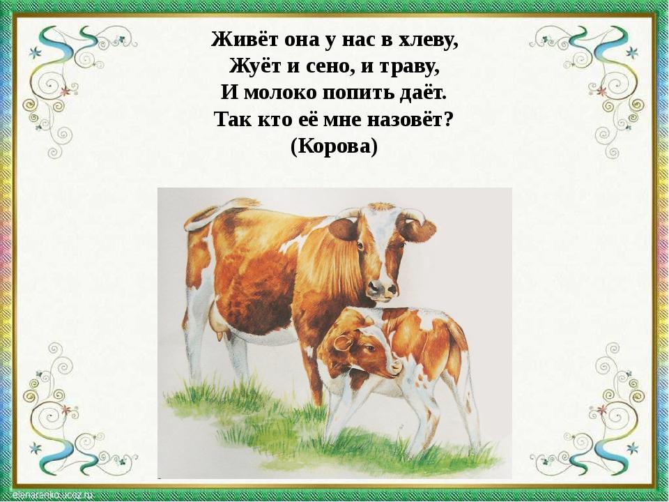 Живёт она у нас в хлеву, Жуёт и сено, и траву, И молоко попить даёт. Так кто...