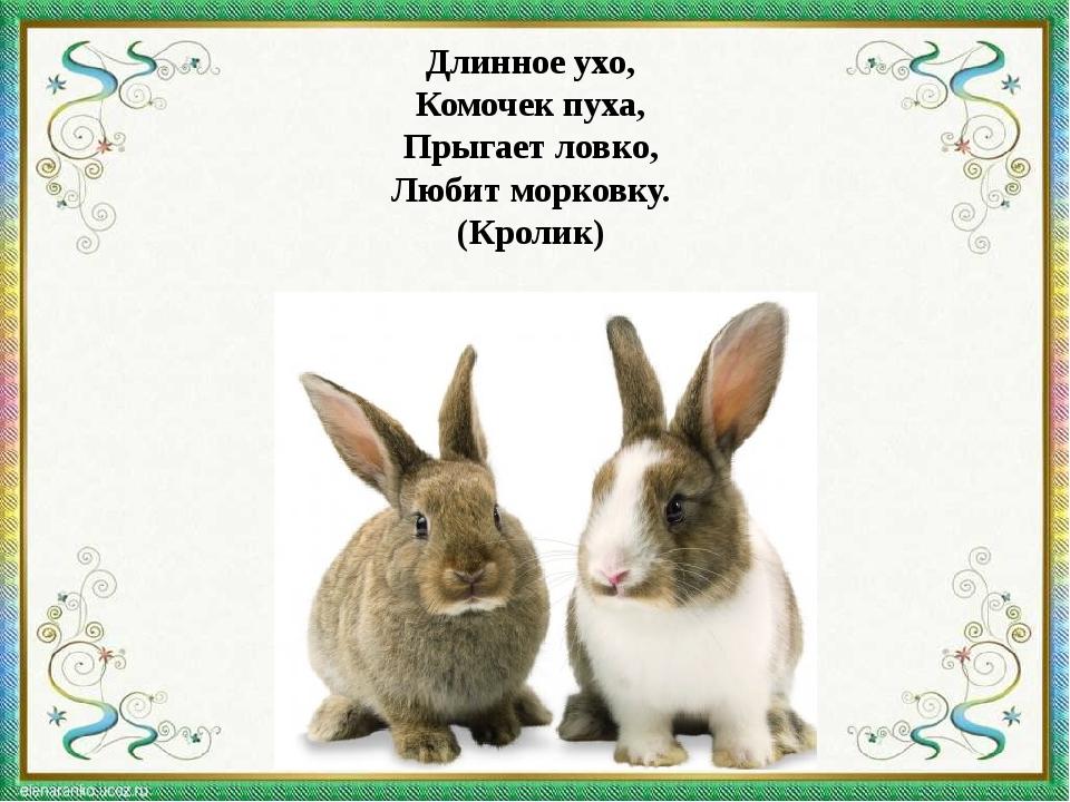Длинное ухо, Комочек пуха, Прыгает ловко, Любит морковку. (Кролик)