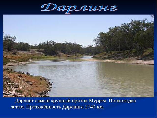 Дарлинг самый крупный приток Муррея. Полноводна летом. Протяжённость Дарлинг...