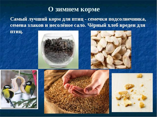 О зимнем корме Самый лучший корм для птиц - семечки подсолнечника, семена зла...