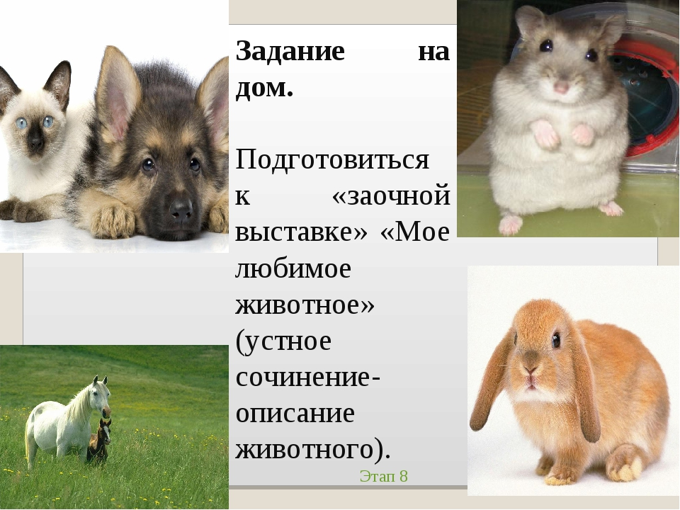 Задание на дом. Подготовиться к «заочной выставке» «Мое любимое животное» (ус...
