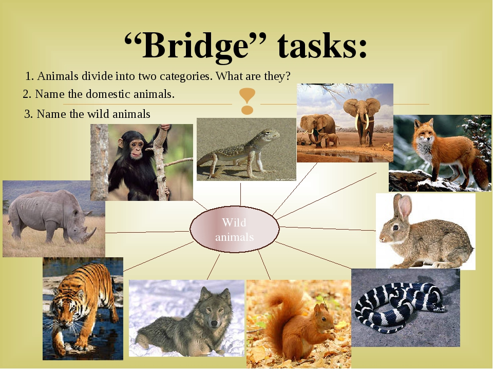 """Bridge"" tasks: Wild animals 1. Animals divide into two categories. What are..."